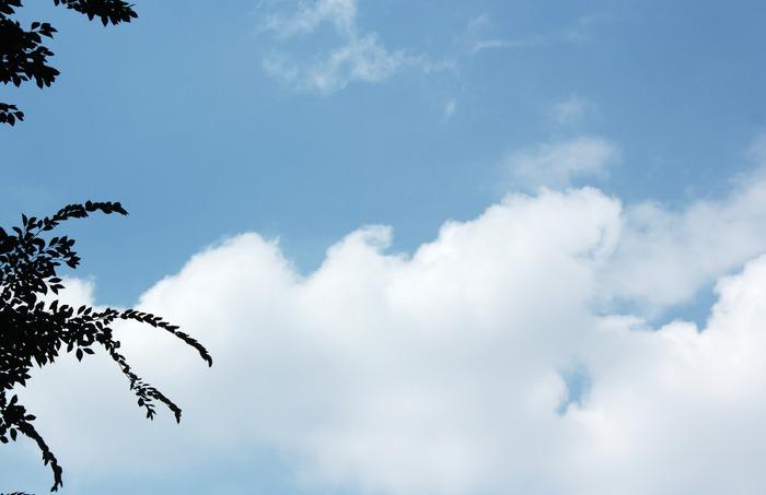 靠近树叶边的蓝天白云