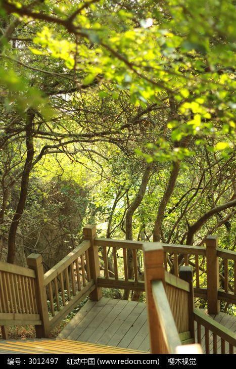森林公园空空的木栈道