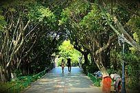 森林公园牵手漫步的情侣