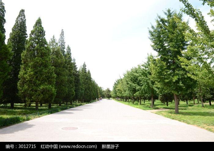 小路边的小树图片,高清大图_树木枝叶素材