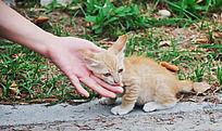 喜欢依偎的小猫咪