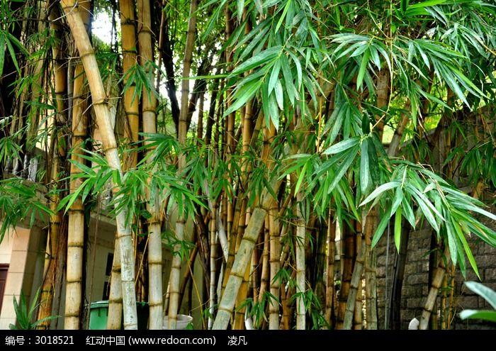 原创摄影图 动物植物 树木枝叶 黄色的竹子  请您分享: 红动网提供
