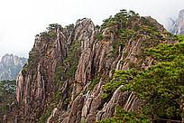 黄山春  陡峭的黄山崖壁