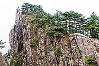 黄山春  山峰上翠绿的黄山松