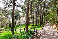 黄山春  狮林酒店松林