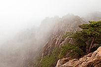 黄山春  雾里观景