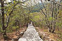 黄山春  西海的灌木林