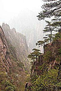 黄山春  悬崖峭壁