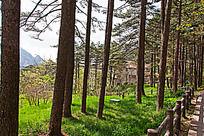 黄山春  阳光透过松林