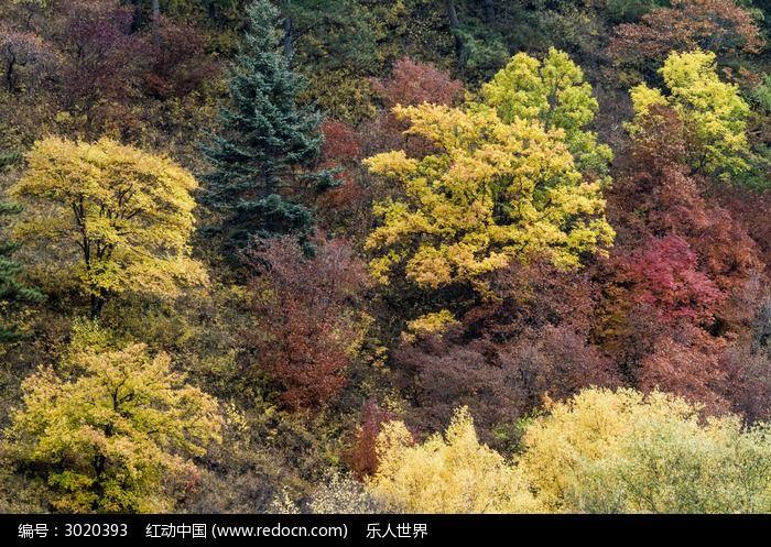 秋季彩色树林