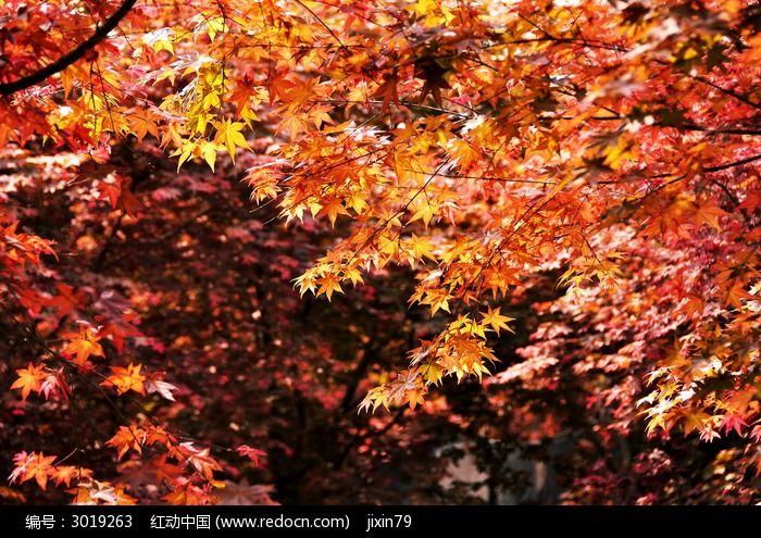 一片红树林图片