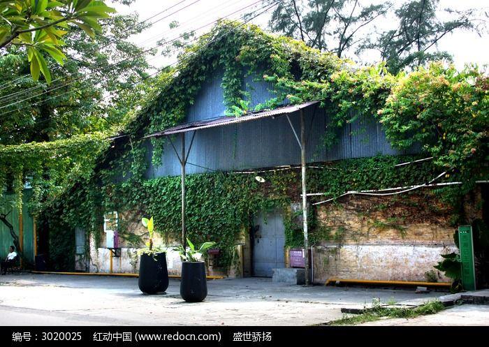 植物建筑图片,高清大图