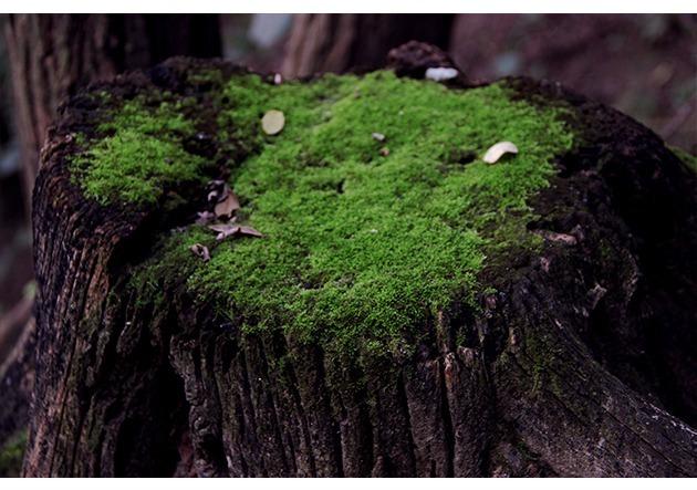 长满了绿色青苔的灰色树根