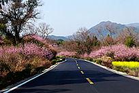 公路两旁都是盛开的桃花