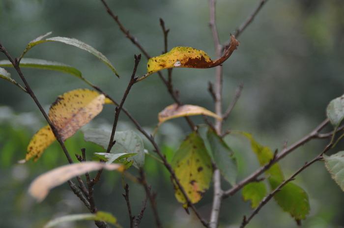 原创摄影图 动物植物 树木枝叶 几片枯黄的叶子