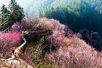 卖花渔村的自然景观