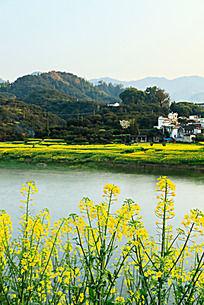 美丽的新安江