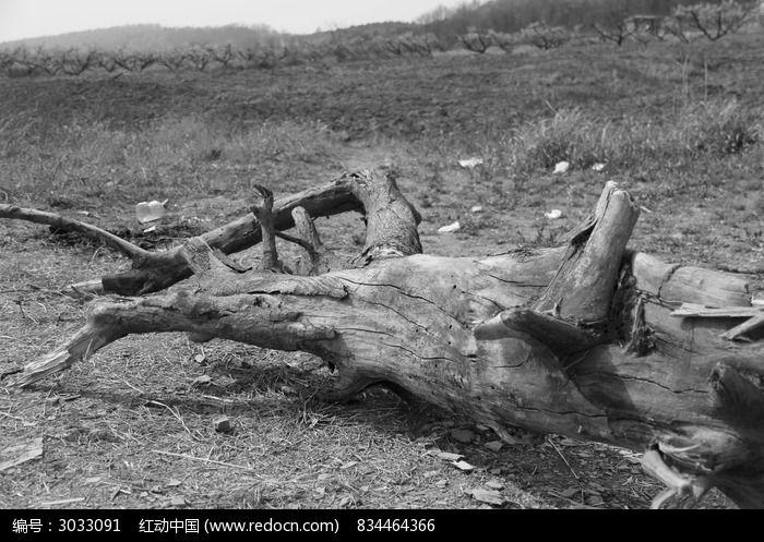 原创摄影图 动物植物 树木枝叶 木头  请您分享: 红动网提供树木枝叶
