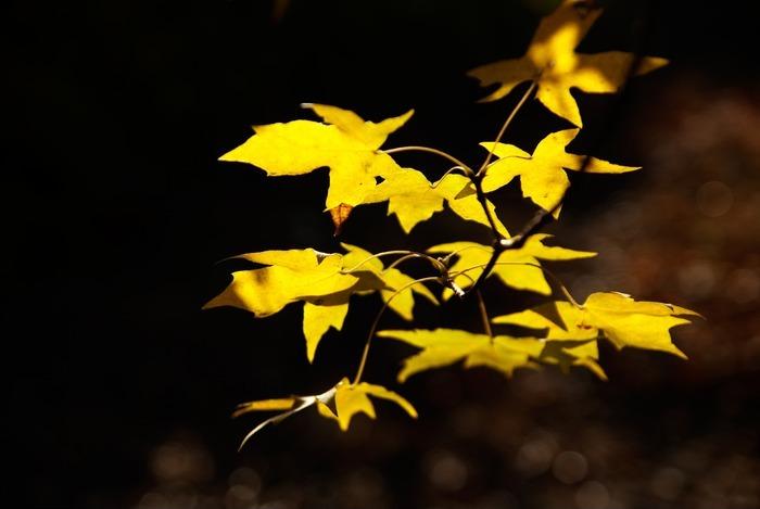 原创摄影图 动物植物 树木枝叶 秋天树叶黄了  请您分享: 红动网提供