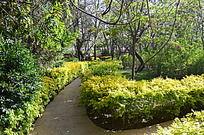 沙坡头景区里的花园