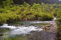 树正群海湍急的小溪
