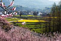 桃花盛开的春天