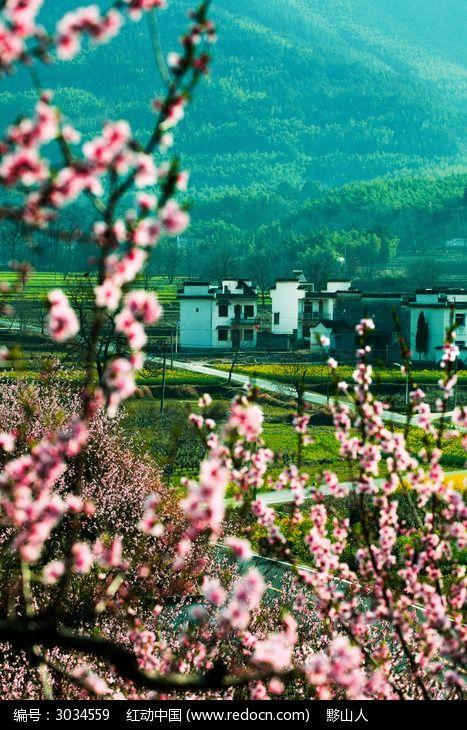 田野春光的桃花图片