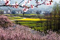 黟县塔川的春色