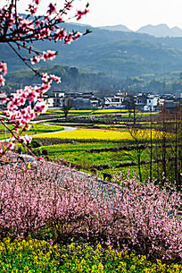 黟县塔川的春天