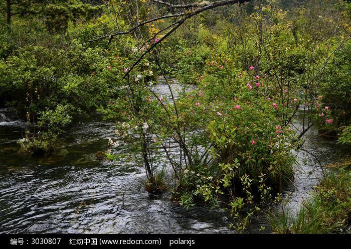 原创摄影图 自然风景 森林树林 溪流中的花丛