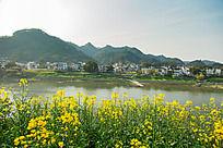 新安江的春天