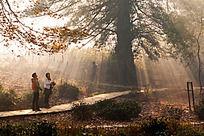 大树下的游客