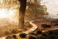 大树下弯曲的小路