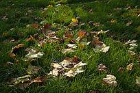 绿草地上的树叶