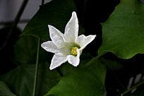 唯美的白色花朵