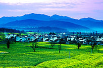 黟县卢村的春天