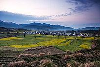 黟县卢村的黎明春色
