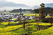 黟县卢村的自然生态