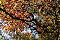 兴隆山上横生的树木