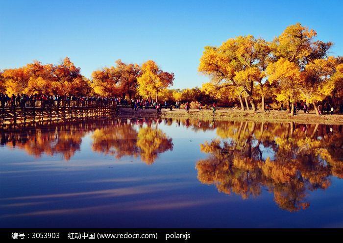 二道桥胡杨树的倒影图片,高清大图_森林树林素材