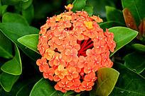 橘红色的花朵
