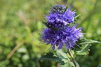 蓝紫色的美丽花朵