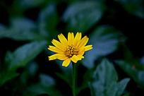 漂亮的野菊花
