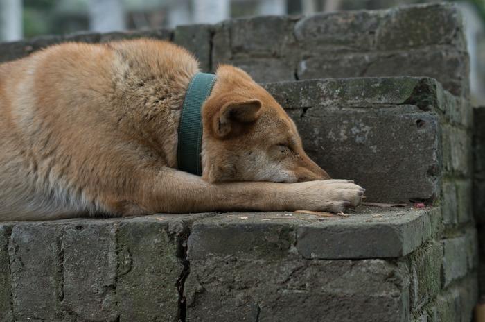 台阶上酣睡的狗狗图片,高清大图_陆地动物素材