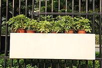 小区绿化盆栽植物带