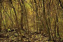 兴隆山上黄色的落叶与树林