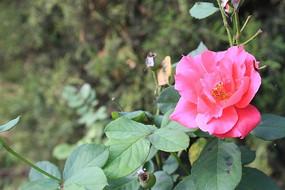 一朵鲜艳的花朵