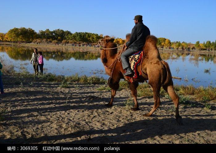 二道桥河边骑骆驼的人高清图片下载 红动网