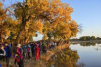 河边看胡杨林日出的游客