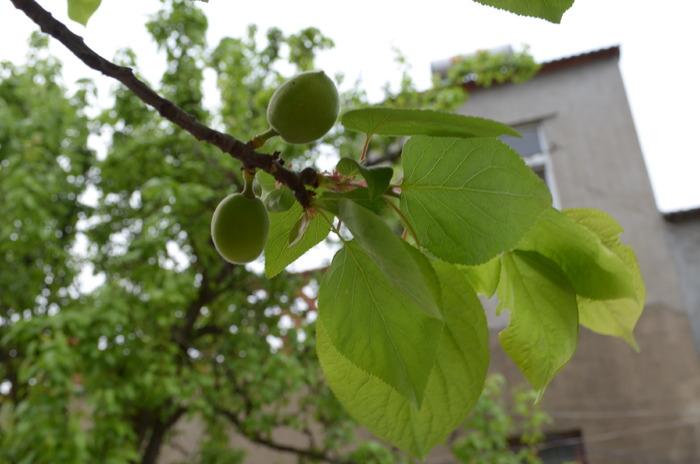 结了果实的树木图片